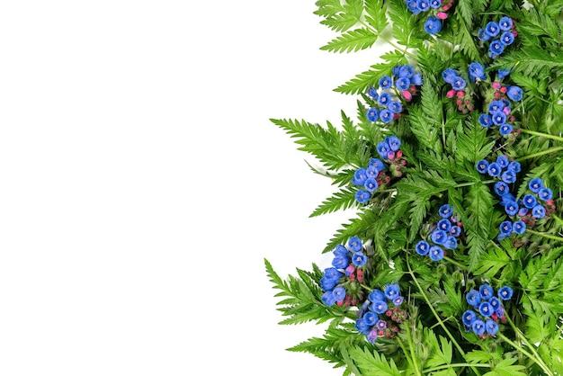 Blauwe bloemen met groene varen op een witte achtergrond. Premium Foto