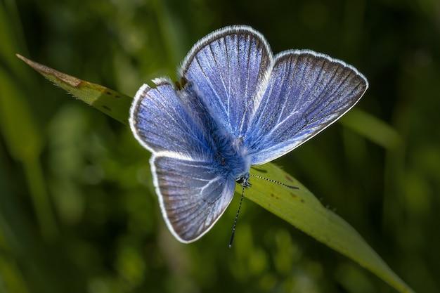 Blauwe en witte vlinder zat op groen blad Gratis Foto