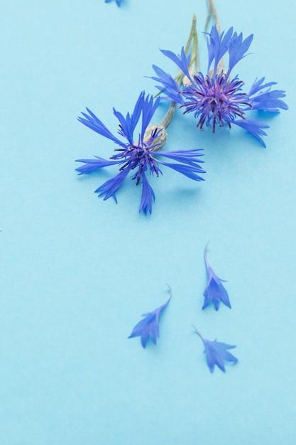 Blauwe korenbloemen op blauw papier achtergrond Premium Foto