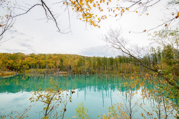 Blauwe vijver (aoiike) in biei, hokkaido herfst seizoen Premium Foto
