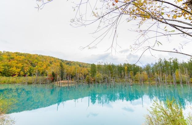 Blauwe vijver (aoiike) in biei, hokkaido herfstseizoen, Premium Foto
