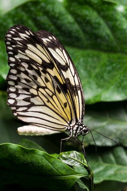 Bleke gekleurde vlinder met gebladerteachtergrond Gratis Foto