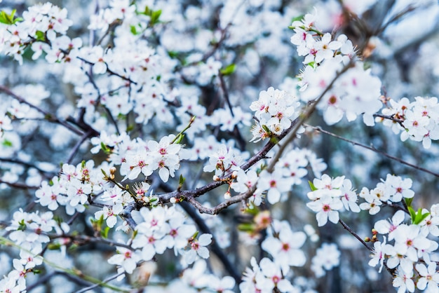 Bloeiende amandelbomen tijdens de lente in een mediterrane stad Premium Foto