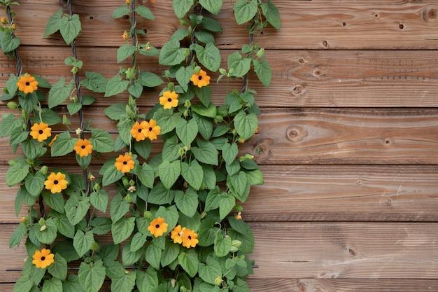 Bloeiende struik van oranje zomerbloemen op een oppervlak van houten bruine planken. Premium Foto