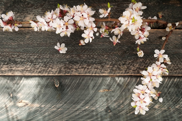 Bloeiende tak op de oude houten achtergrond. lente bloesem. Premium Foto