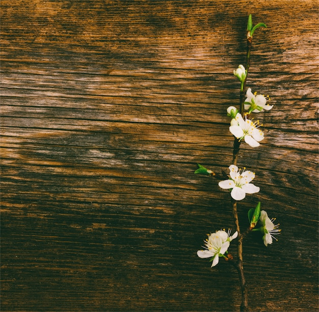 Bloeiende tak op oude houten grunge Premium Foto