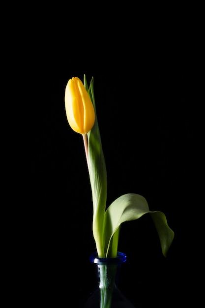 Bloeiende tulp op vaas Gratis Foto