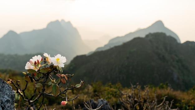 Bloeiende witte bloemen op de voorgrond van het landschap van bergen Premium Foto