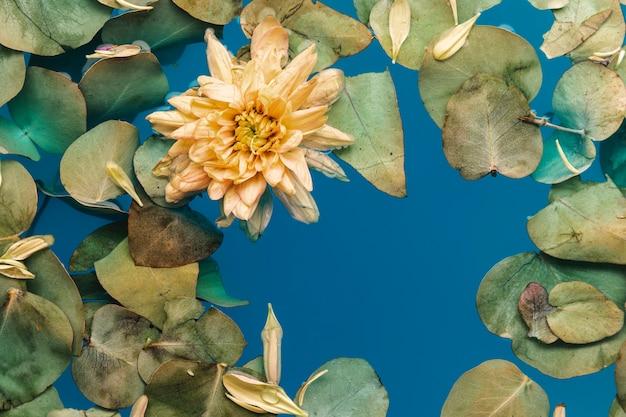 Bloem met bladeren in blauw water Gratis Foto