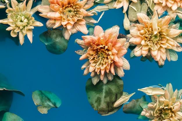 Bloem met bladeren in water Gratis Foto