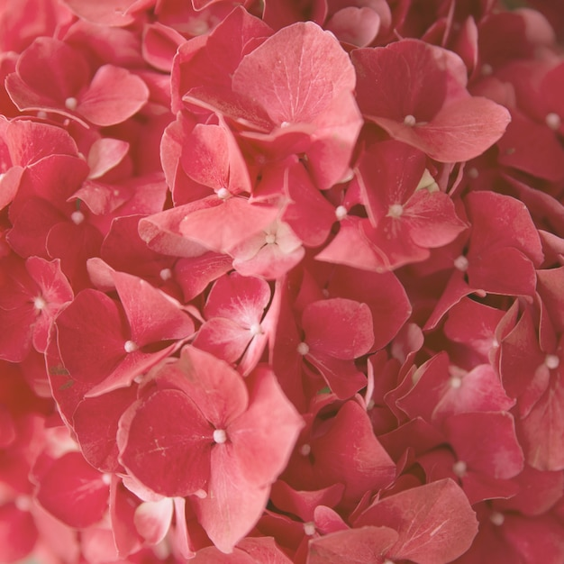 Bloem van de volledig kader de naadloze natuurlijke rode hydrangea hortensia Gratis Foto