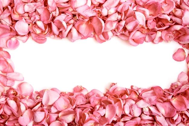 Bloemblaadjes van roze rozen op witte achtergrond Premium Foto