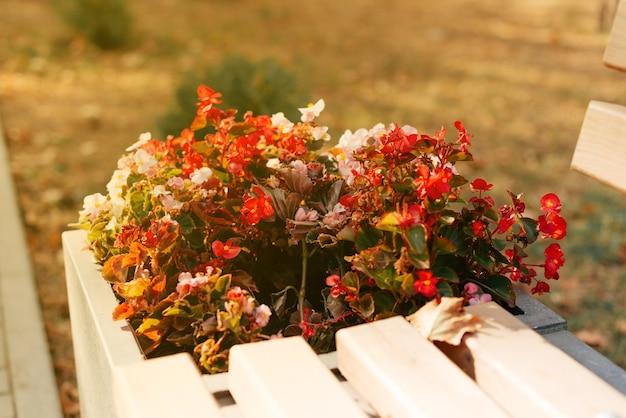 Bloemen bij een bankje in het park Premium Foto