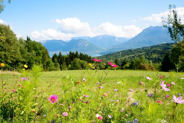 Bloemen met bergen op de achtergrond Premium Foto