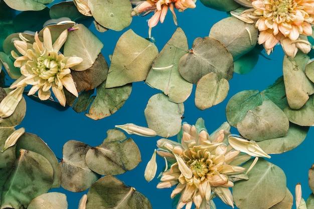 Bloemen met bladeren in blauw water Gratis Foto