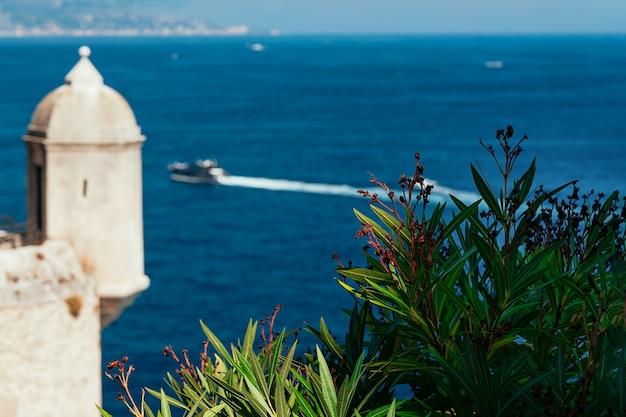 Bloemen met vage zee en prince's palace in monaco Premium Foto
