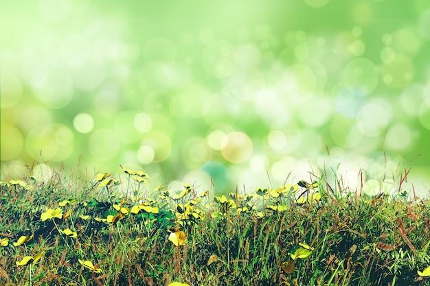Bloemen ontwerp met bokeh-effect Gratis Foto