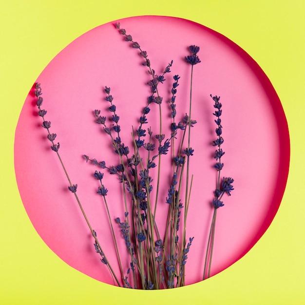 Bloemen op roze achtergrond in groen kader Gratis Foto