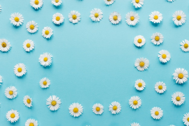 Bloemen samenstelling. kamillebloemen op pastelkleurblauw Premium Foto