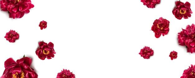Bloemenpatroon van rode pioenbloemen op wit Premium Foto