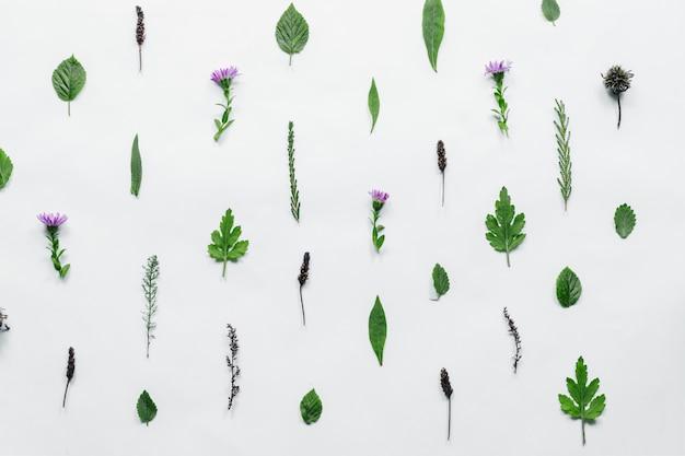 Bloemmotief gemaakt van groene bladeren, takken op witte achtergrond Premium Foto
