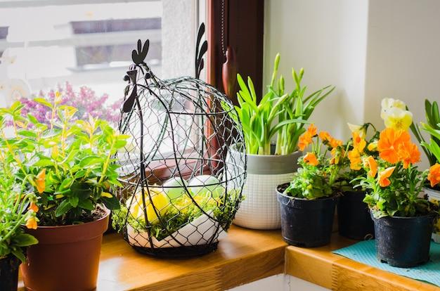 Bloempotten voor kleine tuin, terras of terras. zaailingen van prachtige lente bloemen. Premium Foto