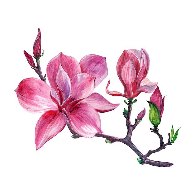 Bloemstuk, bloemenkroon met geïsoleerde magnoliabloemen Premium Foto