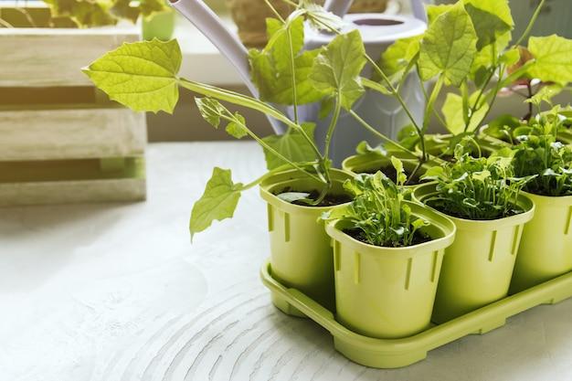 Bloemzaailingen in groene plastic potten Premium Foto