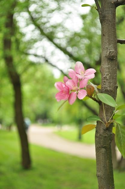 Bloesems van de lente Gratis Foto