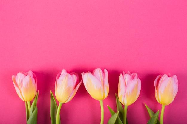 Bloesems van tulpen in lijn Gratis Foto