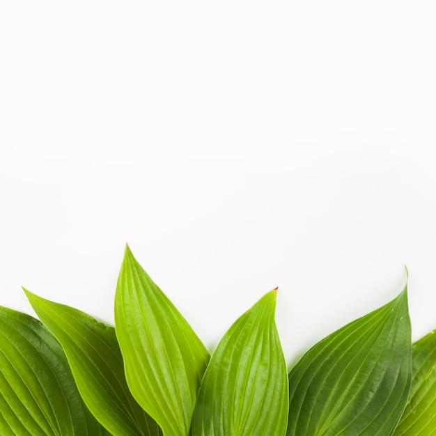 Bodemrand met verse groene bladeren op witte achtergrond wordt gemaakt die Gratis Foto