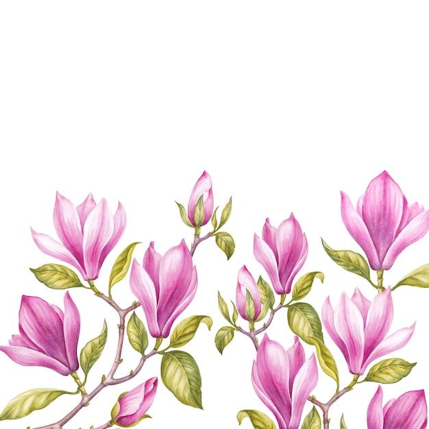 Boeket van magnolia. Premium Foto