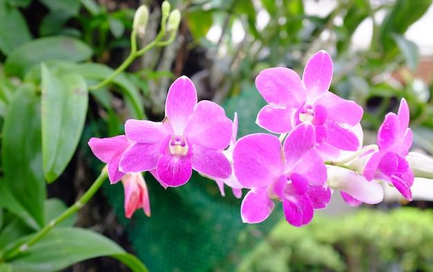 Boeket van roze bloemenorchideeën Premium Foto