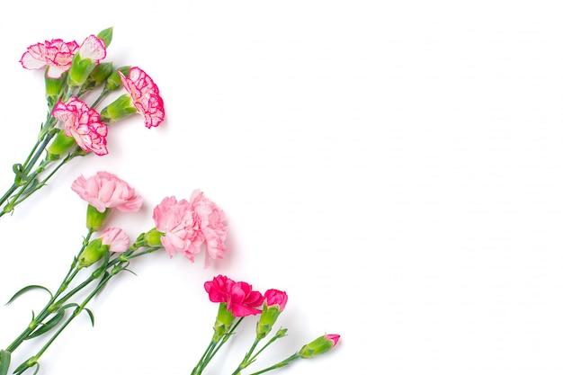 Boeket van verschillende roze geïsoleerde anjerbloemen Premium Foto