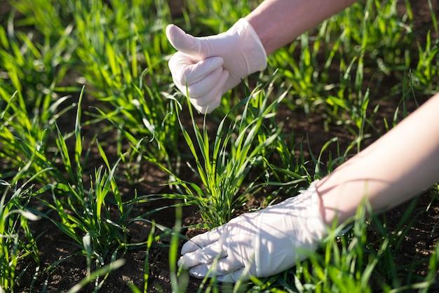 Boer agronoom die de kwaliteit van gewassen in het veld controleert Gratis Foto