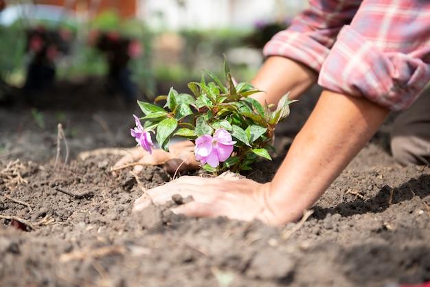 Boer bloemen voorbereiden voor de landbouw Premium Foto