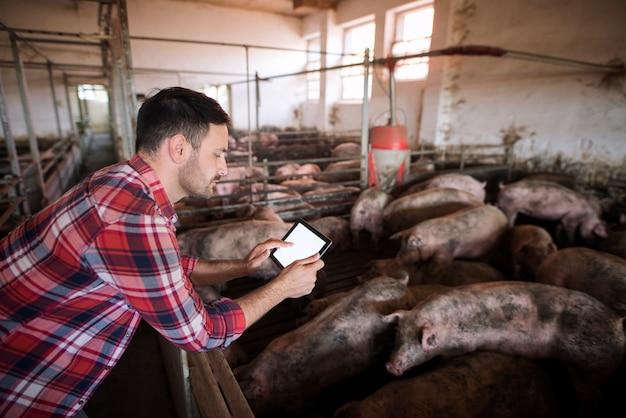 Boer op varkensbedrijf met behulp van moderne applicatie op zijn tablet om de gezondheidstoestand en het voedselrantsoen van varkens te controleren Gratis Foto