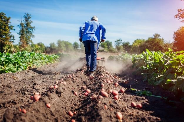 Boer rijden kleine tractor voor grondbewerking en aardappelrooien. aardappeloogst in de herfst Premium Foto