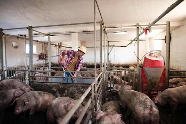 Boer van middelbare leeftijd schoonmaken bij varkensboerderij Gratis Foto