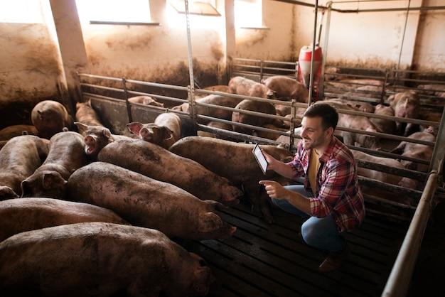 Boer veehouder die voor varkens zorgt Gratis Foto
