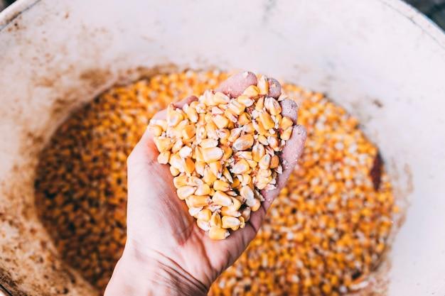 Boerderij concept met dierlijk voedsel Gratis Foto