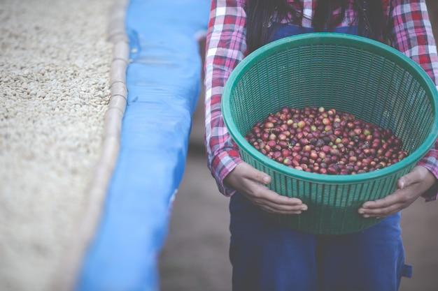 Boeren die vrouwen laten groeien, zijn blij om de koffiebonen te drogen Gratis Foto
