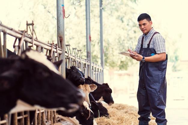 Boeren registreren details van elke koe op de boerderij. Premium Foto