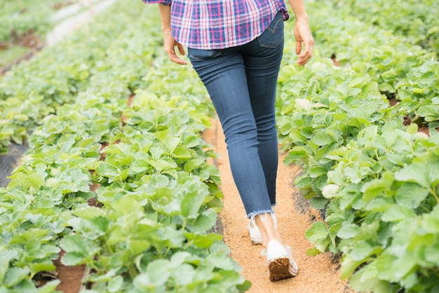 Boeren werken in strawberry farm Gratis Foto