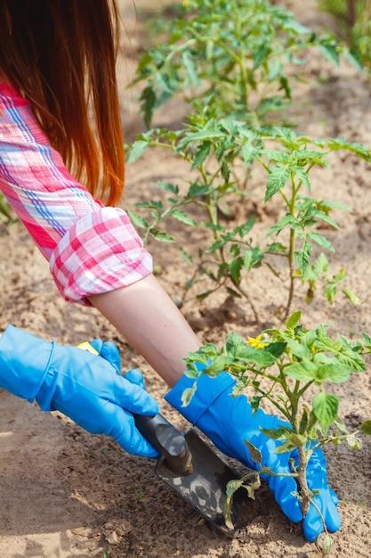 Boerin zorgt voor de planten op de plantage Premium Foto