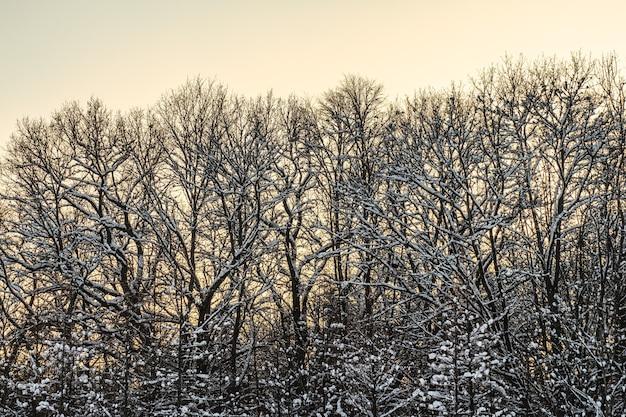 Bomen bedekt met witte vorst Premium Foto