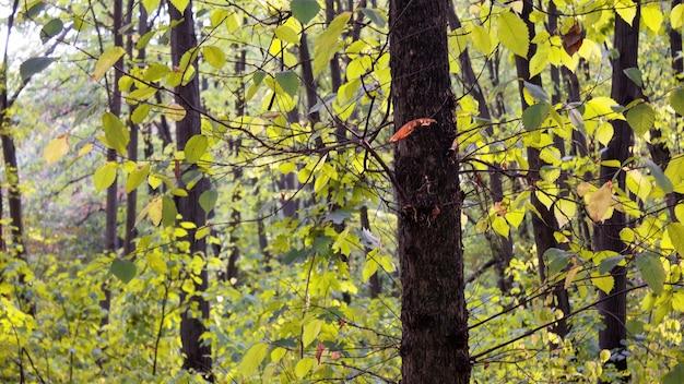 Bomen en struiken met groene bladeren in een bos in chisinau, moldavië Gratis Foto