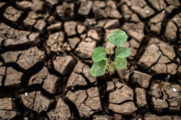 Bomen gekweekt in droge, gebarsten, droge grond in het droge seizoen, opwarming van de aarde Gratis Foto