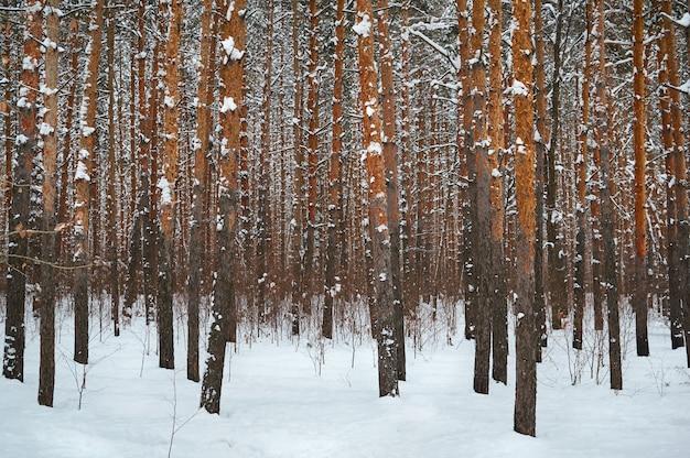 Bomen het besneeuwde bos Premium Foto
