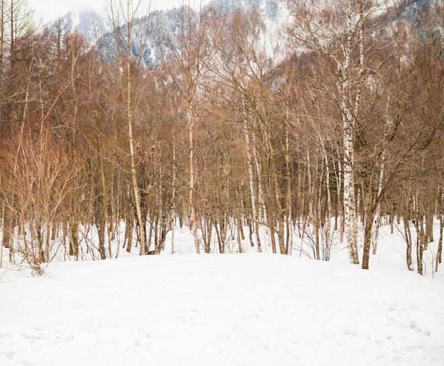 Bomen in de met sneeuw bedekte valleien in de winter Premium Foto
